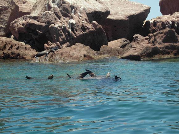 leoni marini