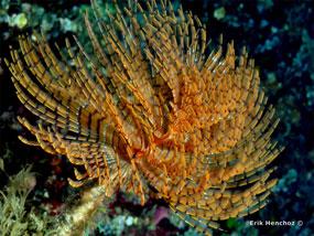Fotografia subacquea Nikon Coolpix S225