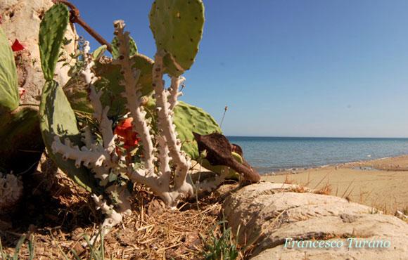 il corallo giallo, Dendrophyllia ramea