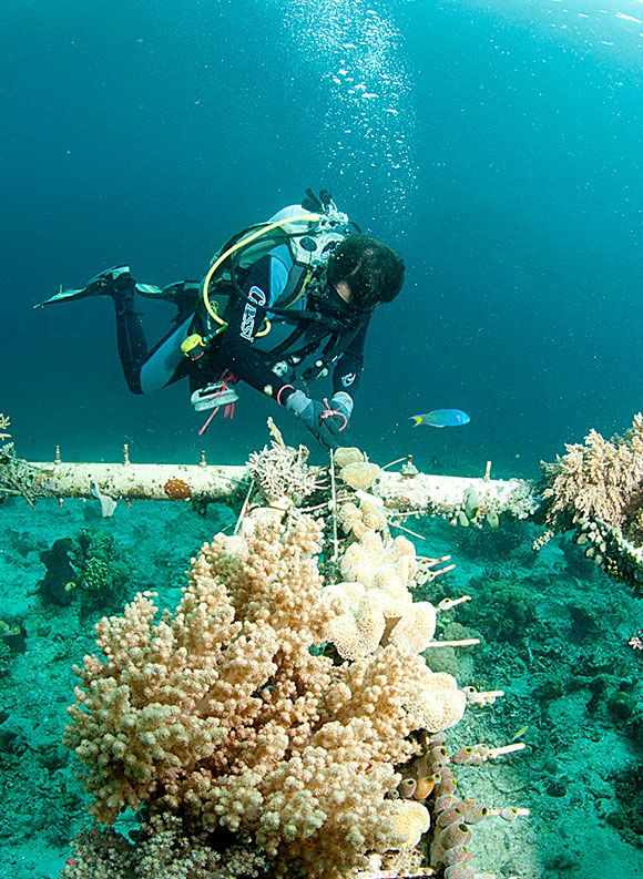 master online biologia marina