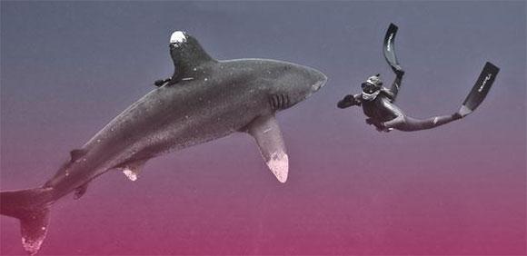 Julie Andersen si è immersa tra gli squali Longimanus in Sud Africa
