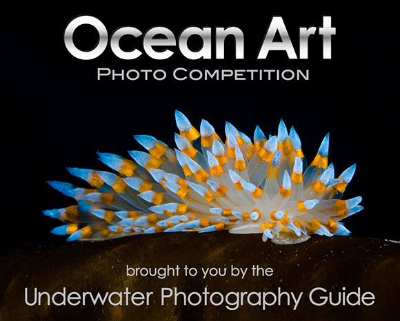2014 Ocean Art Photo Competition
