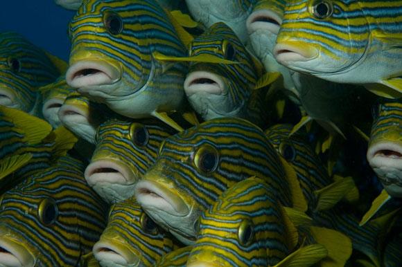 Immersione subacquea, branco di pesci in Indonesia