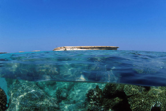 Immersioni subacquee diving alle Farasan Banks
