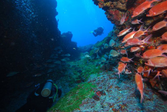 Immersioni subacquee, diving in Brasile