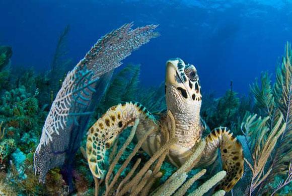 diving center cayo largo