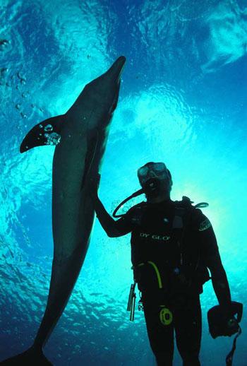 immersione coi delfini