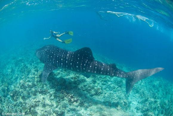 Il conte max articolo su scubaportal portale subacqueo for Sfondi animati pesci