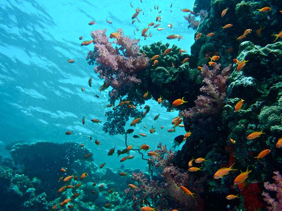 barriera corallina sudan