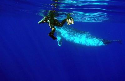 baleine-a-bosse