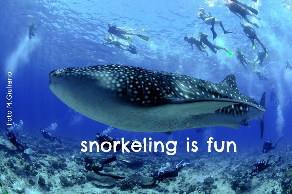 snorkeling_balena