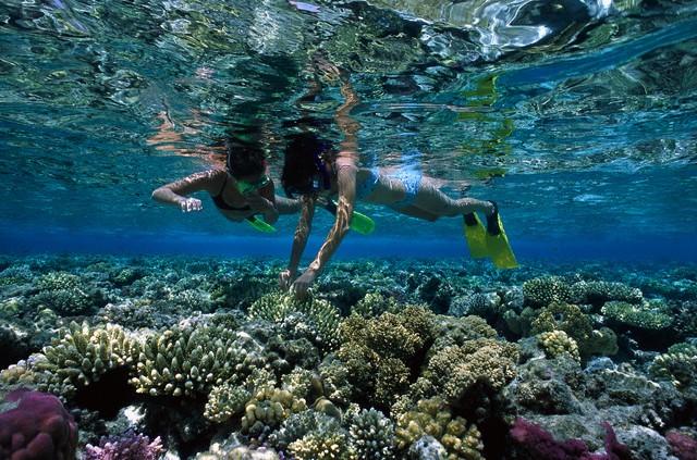 Mar rosso - snorkeling