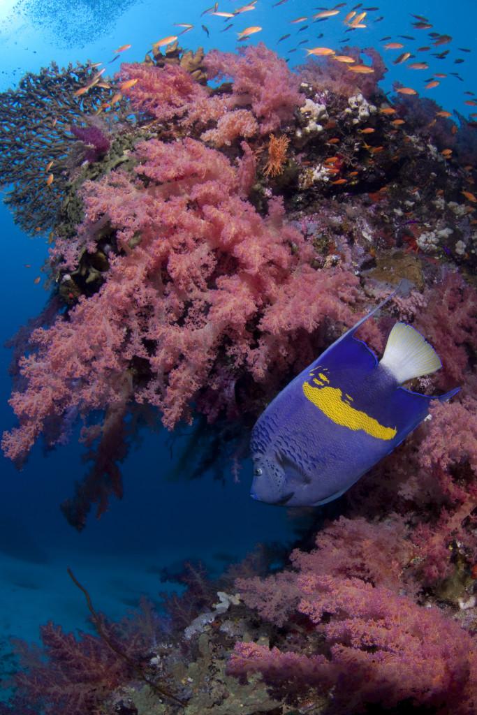 coralli e pesci