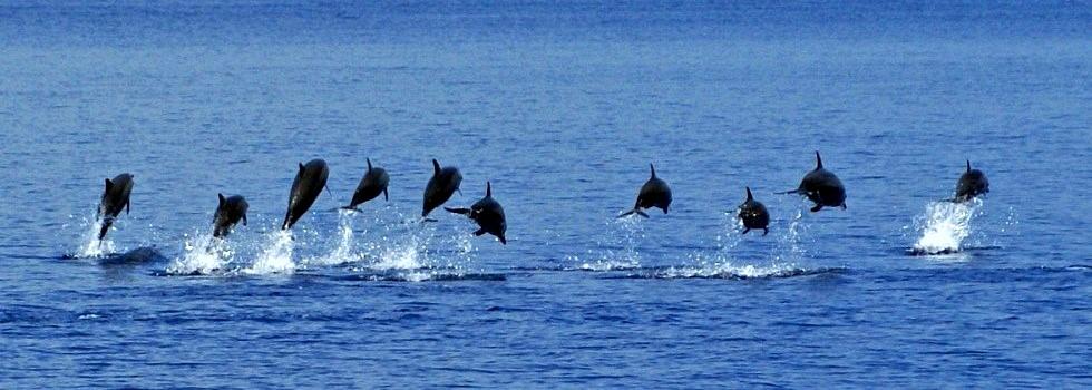 delfini_maldive