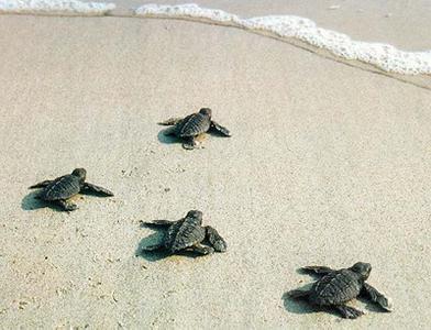 nascita tartarughe