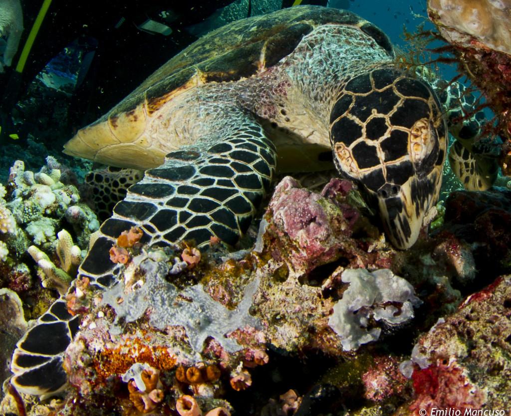 snorkeling _komodo (2)