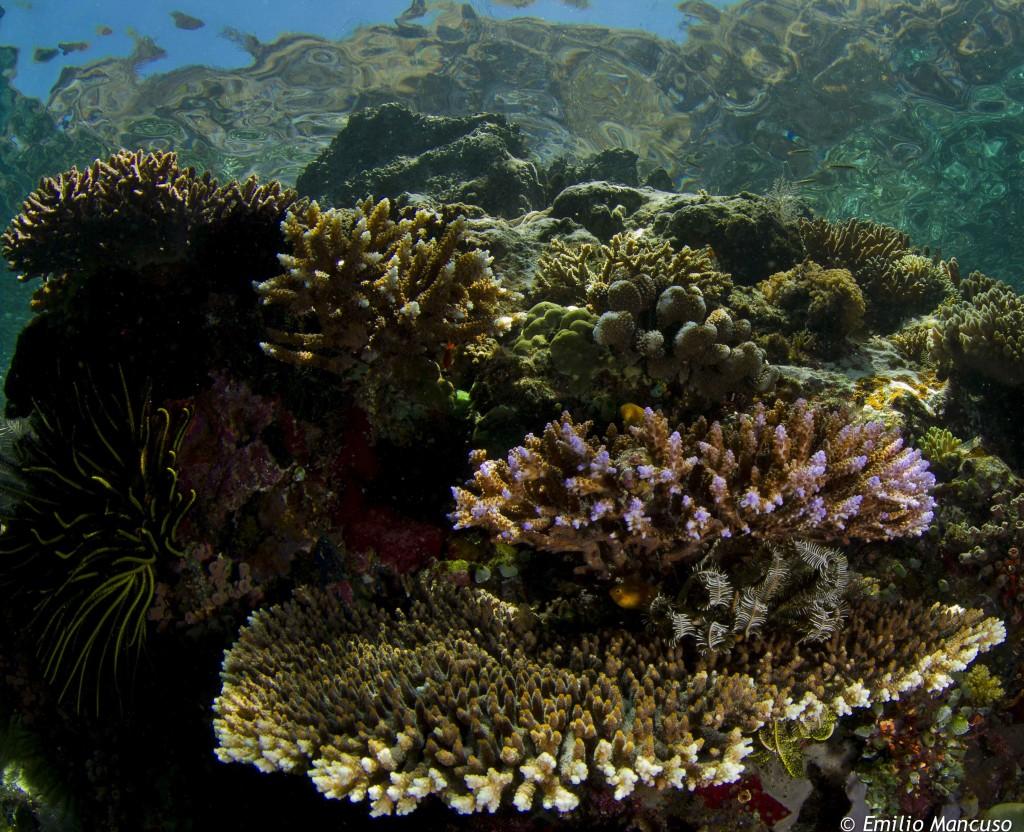 snorkeling _komodo (6)