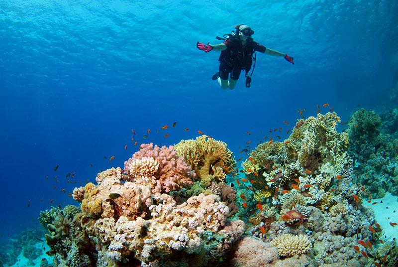 Da quasi 30 anni il Camel Dive Club di Sharm viene scelto da sub disabili di tutto il mondo