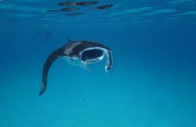 Dentro il Mare... in crociera alle Maldive!