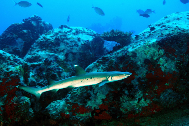 Shark Bank 102_0999_041bassa