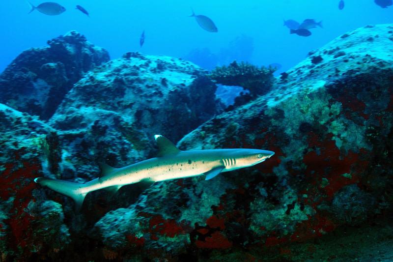Shark Bank 102_0999_041bassa