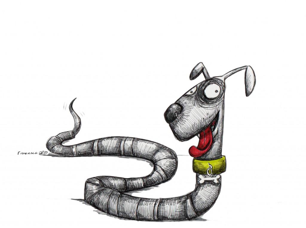 vermo cane