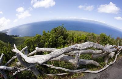 Reserva forestal of Recreio da Prainha, Pico Island, Azores, Atlantic Ocean