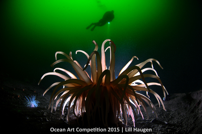 "1st Place Cold Water: Lill Haugen - ""Anemone Light"""