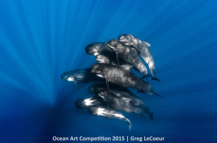 """1st Place Portrait: Greg LeCoeur - """"Pilot Whales"""""""