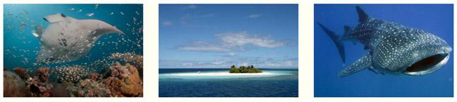 maldive roulette 2