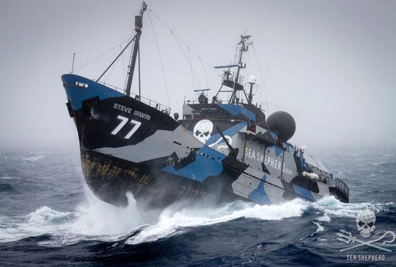 """La Steve Irwin, nave ammiraglia di Sea Shepherd, è partita da Melbourne, in Australia per pattugliare le """"zone d'ombra"""" dell'Oceano del Sud."""