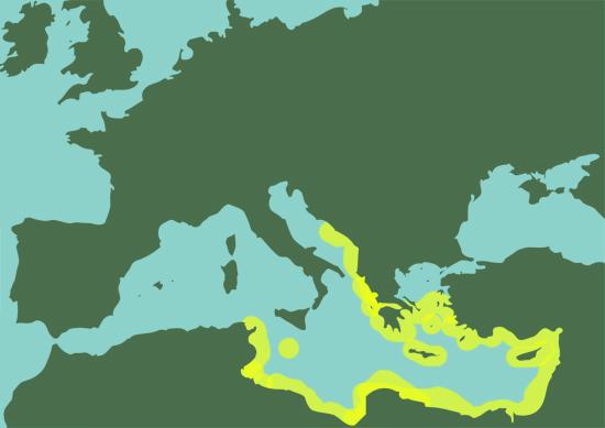 MEDITERRANEOsr