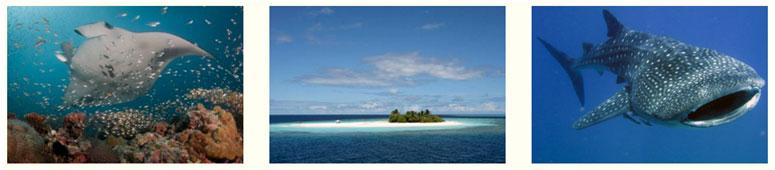 maldive-last-second