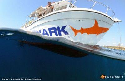 orange-shark