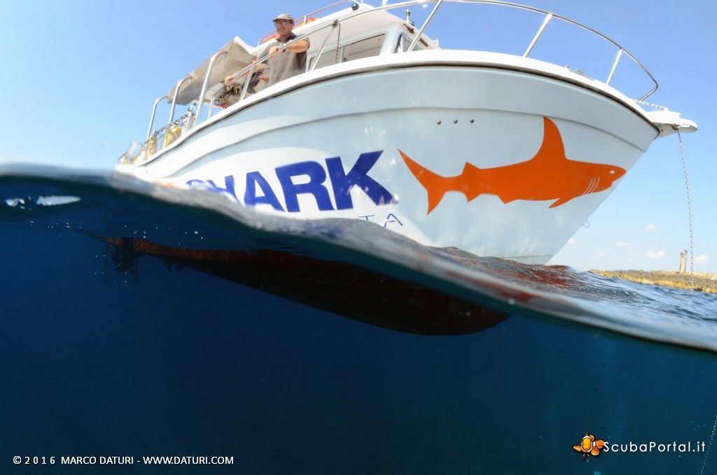 orange-shark-malta-11