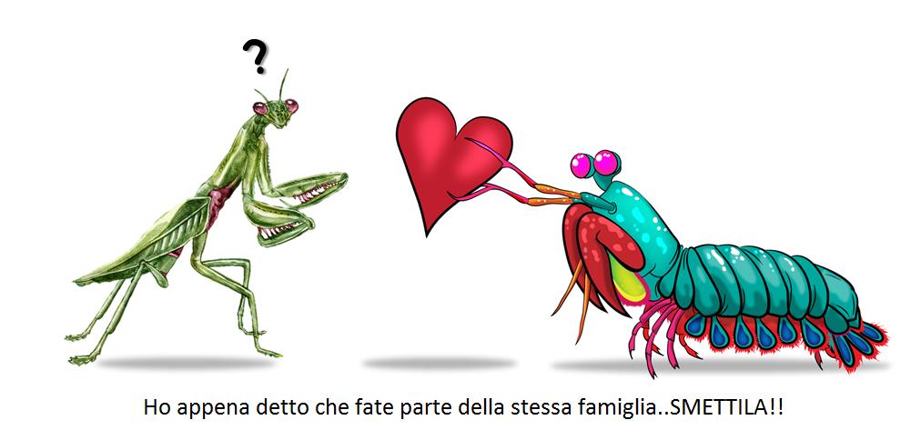foto-mantis-love-caption