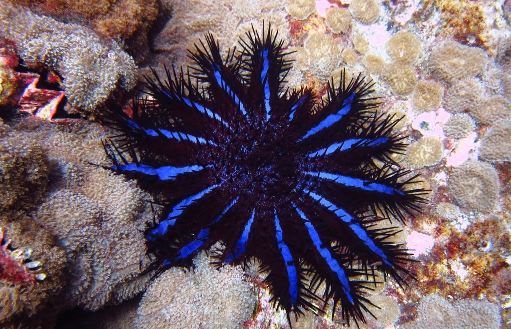 corona-di-spine1