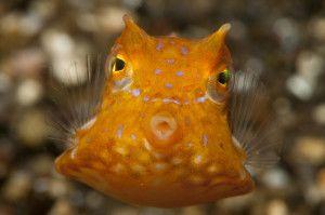 fotografia naturalistica subacquea