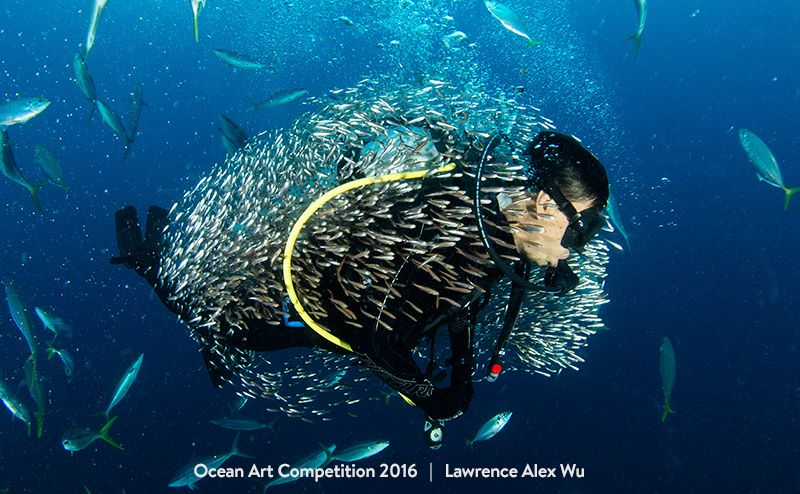 1st-compact-behavior-oa16-lawrence-alex-wu-800px