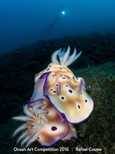 1st-nudibranchs-oa16-rafael-cosme-400px-vert