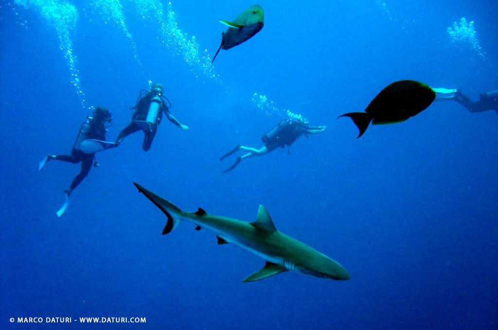check dive