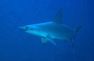 silenzio degli squali