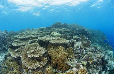 reef salvabile