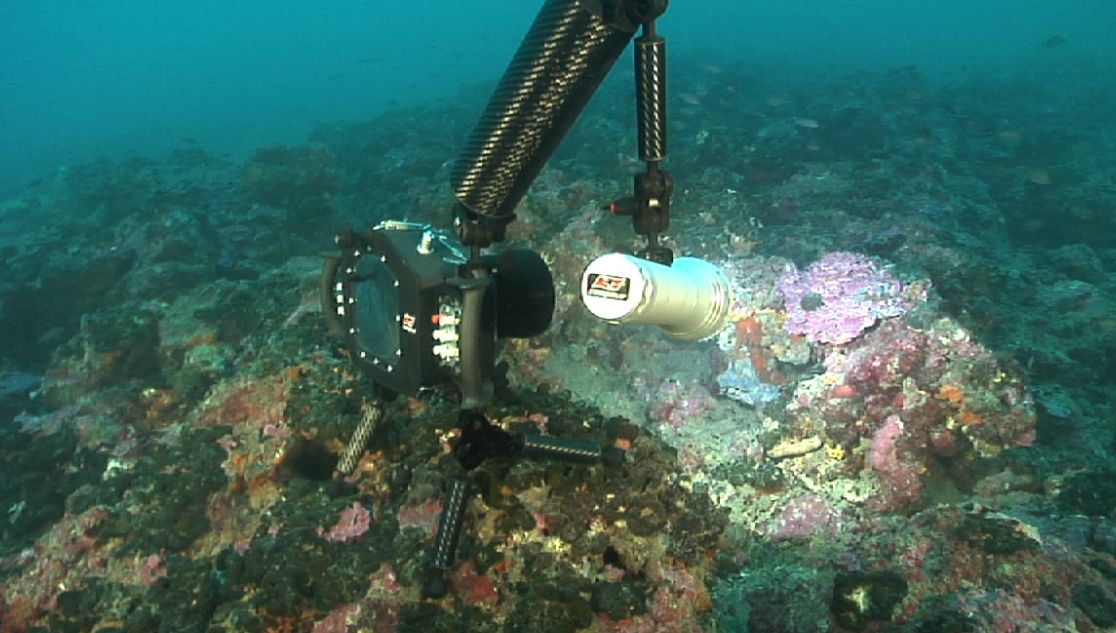 tecnica di videoripresa subacquea con le reflex