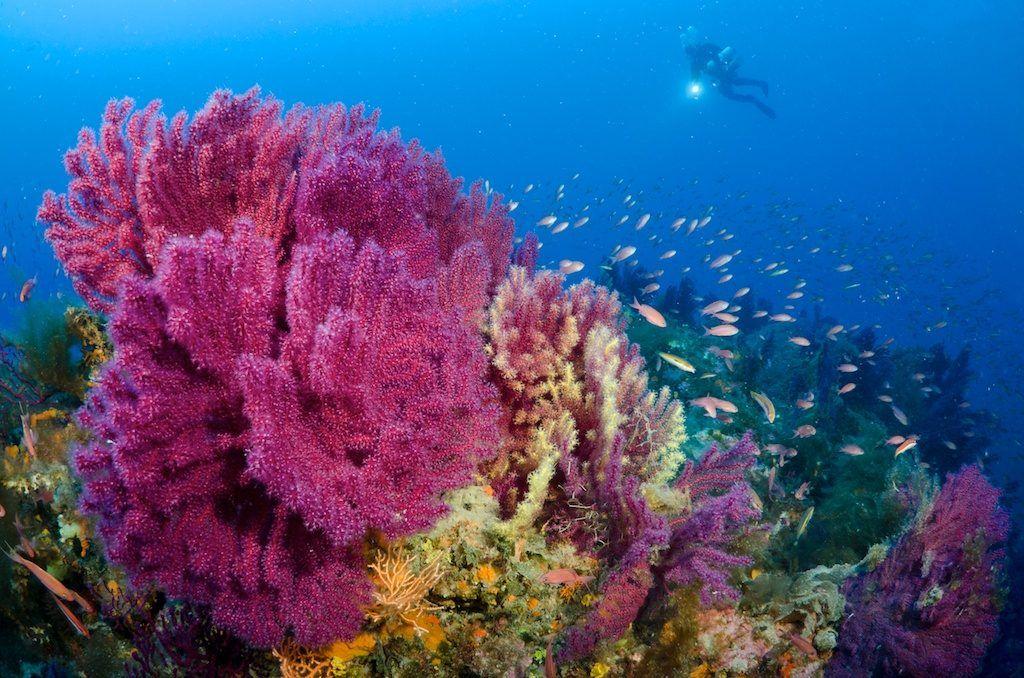videoripresa subacquea