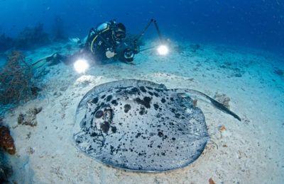 vvideoripresa subacquea