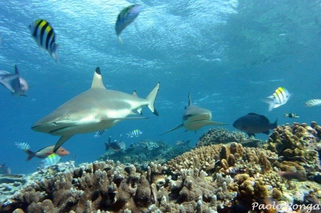 immersioni alle isole Fiji