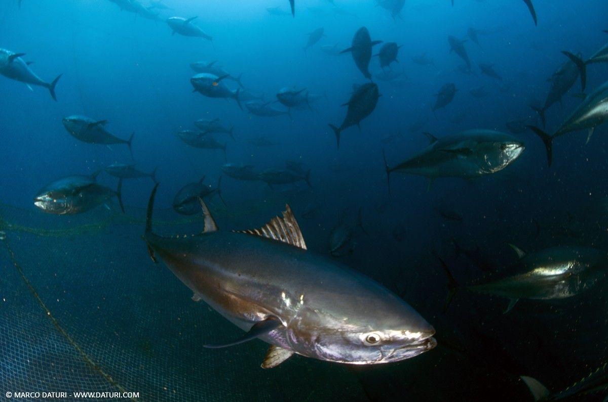 Immersione in tonnara a Malta