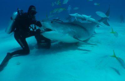 immersioni con gli squali