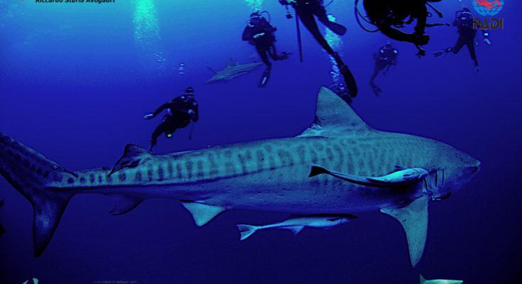 shark expert